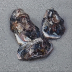Austern- 23 XII,  Öl auf Leinwand. 70 x 70 cm, 2018
